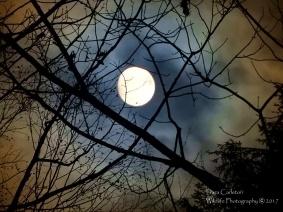 cloud moon cw