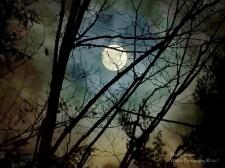 cloud moon tree cw