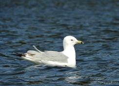 gull meadows 2018