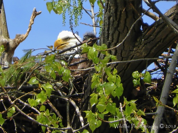 Mother and Child, Hinsdale NH