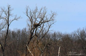 This is 9 over k. A Female bald eagle hatched in 2007. Photo taken in April of 2019.