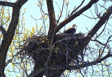 2019 Nest Sitting