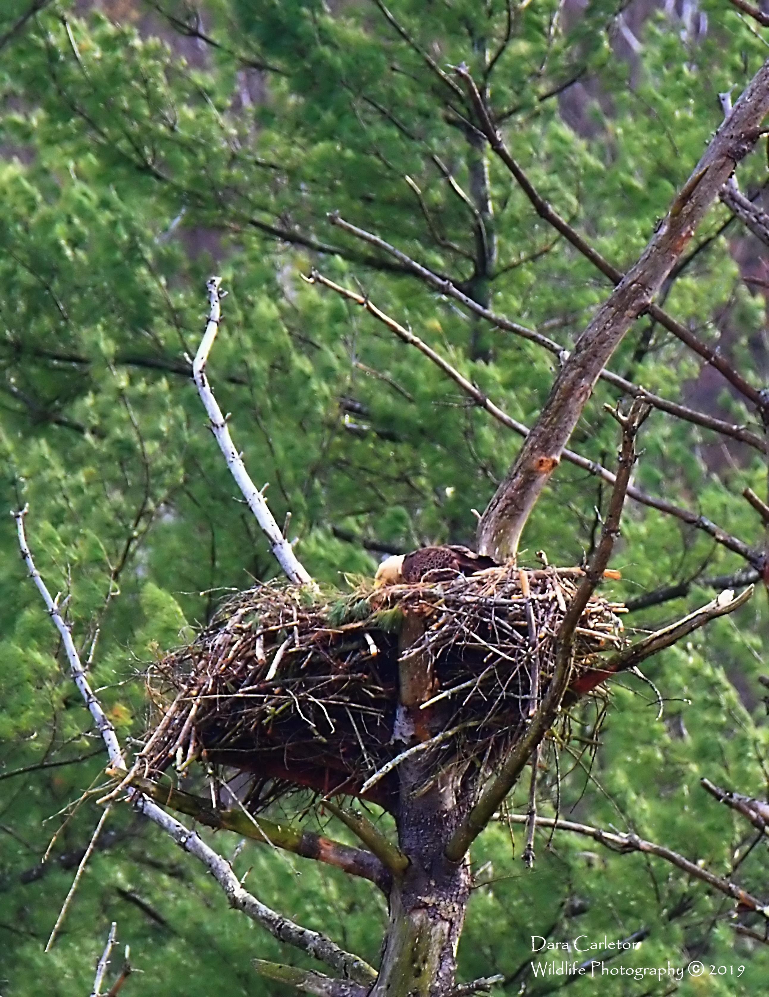 TOWNSHEND APR 30 2019 in nest