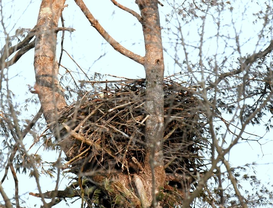 nest walpole