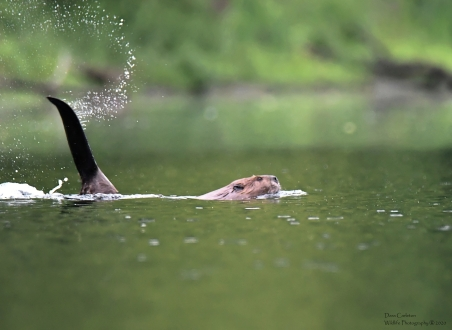 Beaver, West Chesterfield