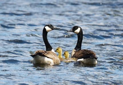Gees family, Brattleboro VT
